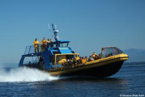 Vancouver, bc,  Whale Watching,  ExplorathorII, zodizc, pacific, ocean